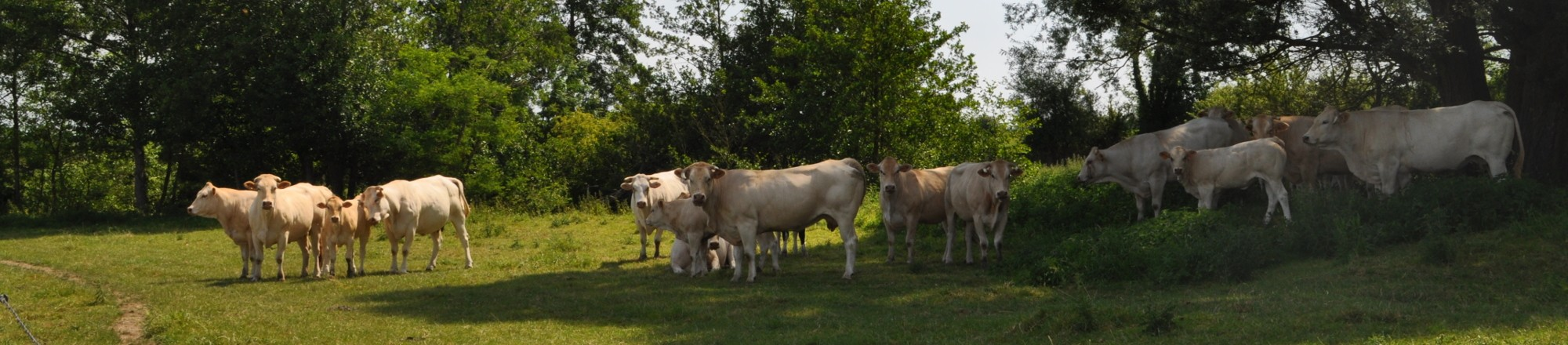 AlphaVision - photo cows